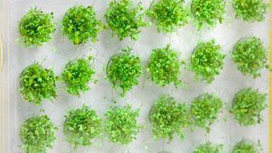 NOCH 07034 — Полевые растения нежно зелёные (42 пучка ~6мм), 1:16—1:220. Сделано в Германии