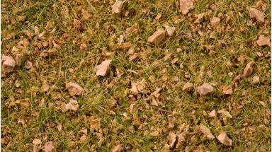 NOCH 07075 — Трава «Альпийский луг» ~2,5—6мм (флок ~50 гр.), 1:18—1:120