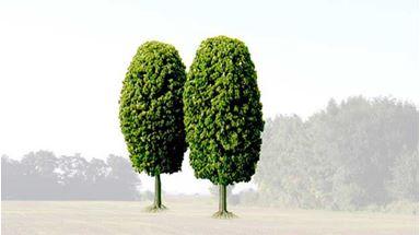 BUSCH 6054 — Лиственные деревья (2 шт., ~130мм), 1:72—1:120