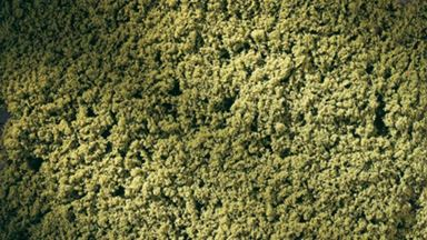 AUHAGEN 76667 — Весенняя зелень (лист 150×250мм ~0,0375 м²), 1:22—1:220