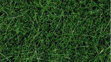 NOCH 07106 — Трава темно-зеленая (флок ~6мм ~50 г), 1:35—1:120
