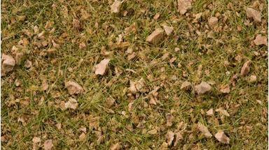 NOCH 07079 — Трава «Альпийский луг» (флок ~2,5—6мм ~100 гр.), 1:18—1:160