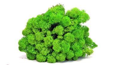 CMOD WM7102 — Мох светло-зеленый макетный (50 г), 1:32—1:500