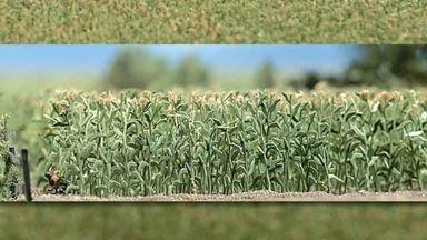 BUSCH 1202 — Кукурузное поле, 1:87